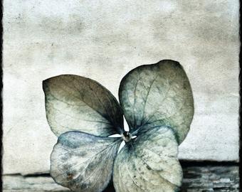"""Photo art color """"Hydrangea"""" 30cm x 30cm  Textured paper"""
