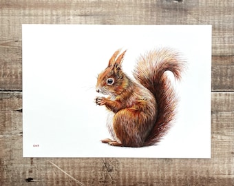 Red Squirrel print A2 - unmounted print - red squirrel print - red squirrel painting - red squirrel art - squirrel design - wildlife art