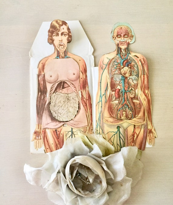Vintage Anatomy Diagram Female Medical 1950s Etsy