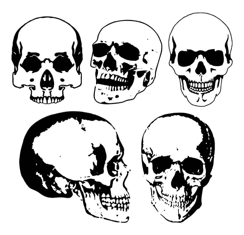 5 Vektor-Schädel Anatomie ClipArt ClipArt Schädel Schädel | Etsy