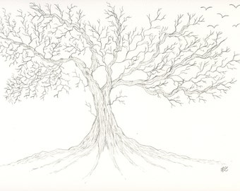 Pencil original drawing one of a kind 7x10 oak tree bare branches black and white hand drawn graphite bare roots with birds not a print sign