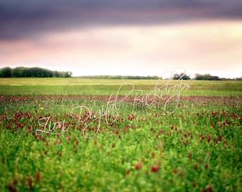 Red Flower Field Digital Backdrop