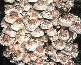 Mushroom kit | Etsy