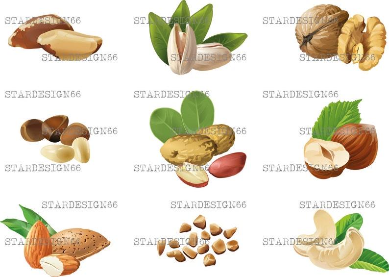 Digital EPS PNG JPG Nuts, almond, walnut, brazil nut, peanut, hazelnut,  pistachio, cashew, vector, clipart, template, instant download