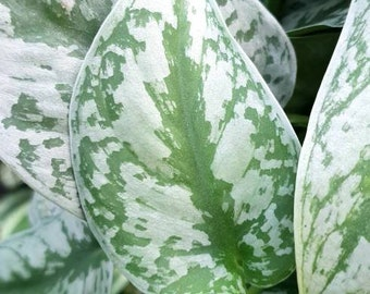 Plant Emporium