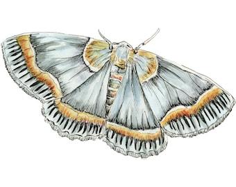 Light blue moth: watercolor print