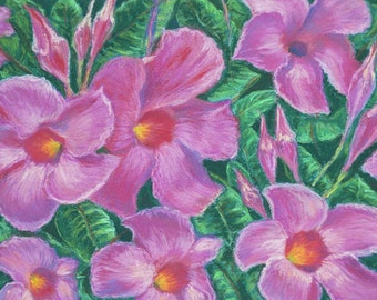 MANDEVILLA FLOWERS in Original 9.25 x 13.5 Pastel Painting by Sharon Weiss
