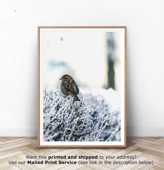 Farmhouse Christmas, Christmas Decoration, White Wall Art, Winter Photography, Bird Art, Sparrow Bird, Holiday Decor, Winter Animal Print