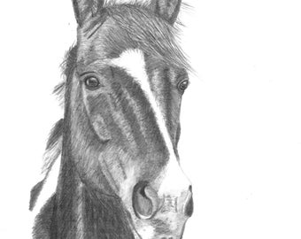 Original Art - Horse #2 Drawing