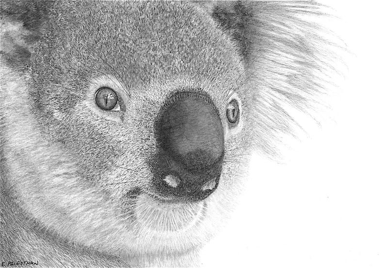 Koala Fundraiser  Fine Art Giclée Print 14x11 inch signed image 0