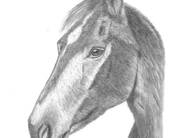 Original Art - Horse #1 Drawing