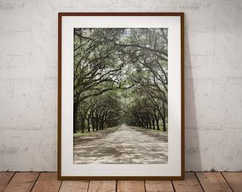 Savannah, Georgia, Treelined, Spanish Moss, Wormsloe, Art Print, Wall Decor