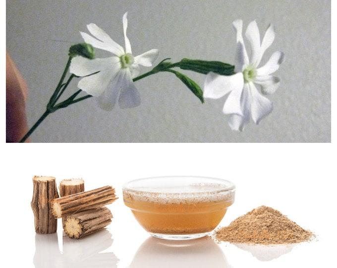 10 AFRICAN DREAM ROOT Silene Undulata Xhosa Herb White Ways Campion Flower Seeds