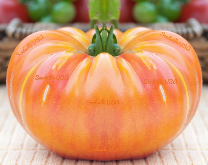 50 OAXACAN JEWEL TOMATO Bicolor Golden Yellow Striped Red Mexican Lycopersicon Vegetable Seeds