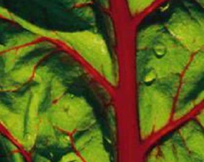300 Ruby RED SWISS CHARD (Perpetual Spinach) Beta Vulgaris Cicla Vegetable Seeds