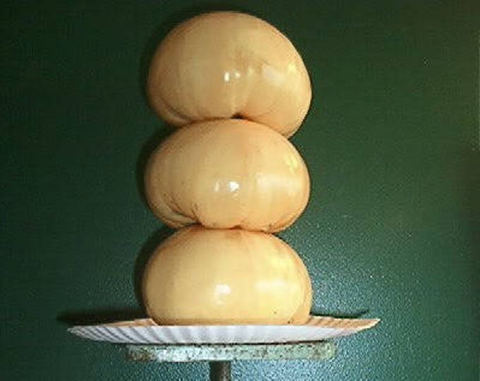 50 WHITE Wonder BEEFSTEAK TOMATO Lycopersicon 1 - 2 lb Fruit Vegetable Seeds