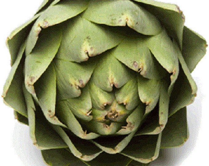 75 GREEN GLOBE ARTICHOKE Cynara Scolymus Vegetable Seeds