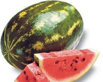 100 CRIMSON SWEET WATERMELON Citrullus lanatus Fruit Melon Seeds
