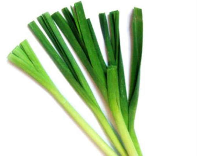 500 CHINESE LEEK (Oriental Garlic / Garlic Chives / Chinese Chives / Flat Chives) Allium Tuberosum Vegetable Seeds