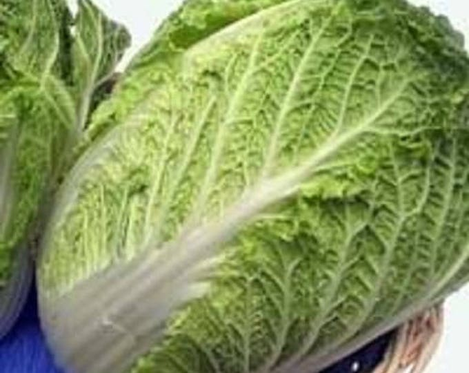 500 MICHIHILI CABBAGE (Chinese Cabbage / Bok Choy / Pak Choi / Celery Mustard / Chinese Chard) Brassica Rapa Chinensis Vegetable Seeds