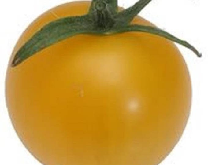 150 GOLDEN JUBILEE TOMATO Yellow Lycopersicon Lycopersicum Fruit Vegetable Seeds