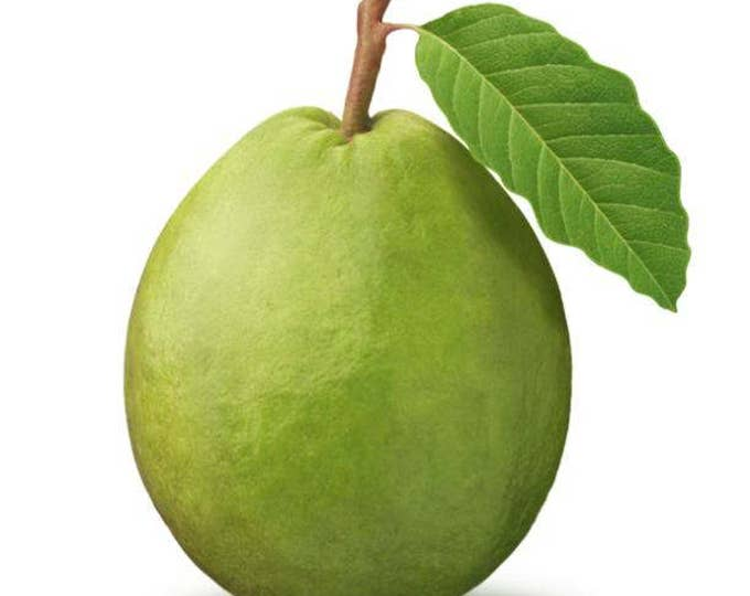 20 GUAVA FRUIT Tree Shrub Psidium Guajava White Flowers Fruit Seeds *Comb S/H