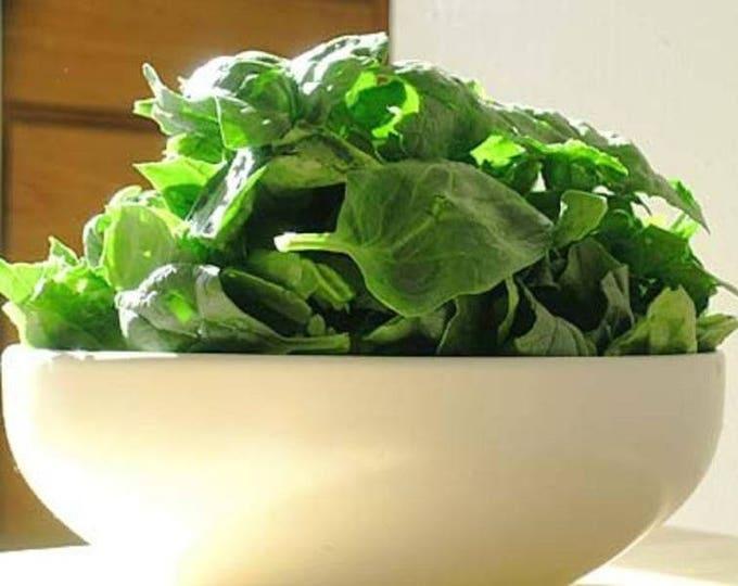 1500 BLOOMSDALE SPINACH Spinacia Oleracea Vegetable Seeds