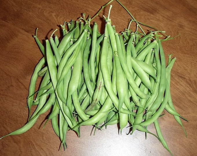 50 GREENCROP BEAN Phaseolus Vulgaris Vegetable Seeds
