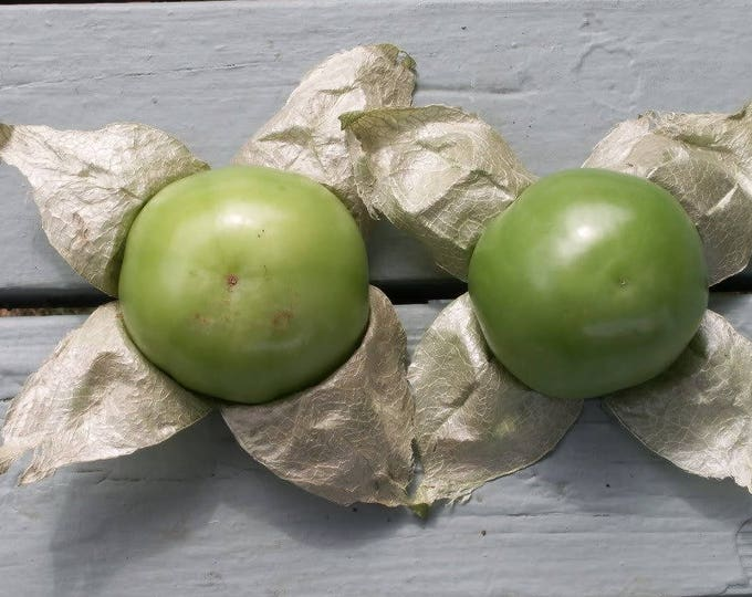 200 GRANDE Rio VERDE TOMATILLO Physalis Ixoxcarpa Vegetable Seeds