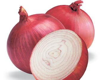 250 RED BURGUNDY ONION Allium Cepa Vegetable Seeds
