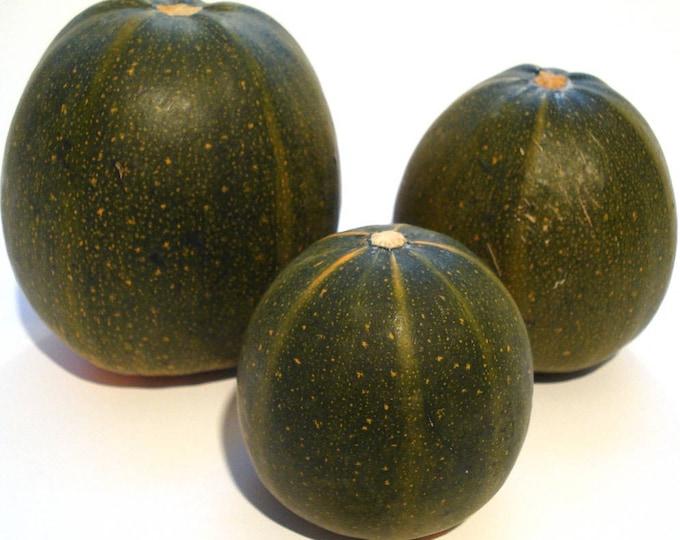 35 Sweet TATUME SQUASH Cucurbita Pepo Calabash Calabacita Mexican Zucchini Seeds