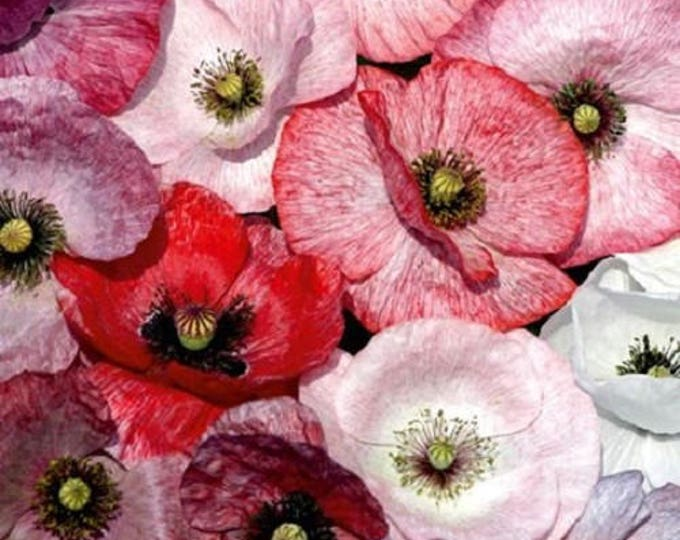 100 MOTHER Of PEARL POPPY Mix Papaver Rhoeas Flower Seeds Mixed Colors *Flat Shipping