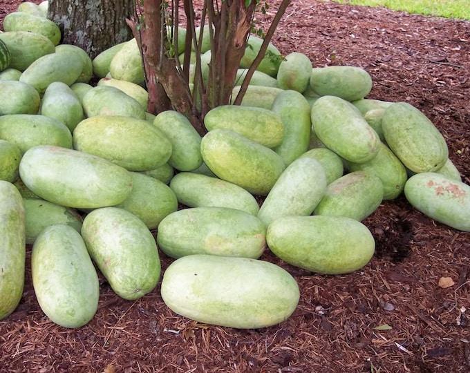 50 CHARLESTON GRAY WATERMELON Citrullus Lanatus Red Fruit Melon Seeds