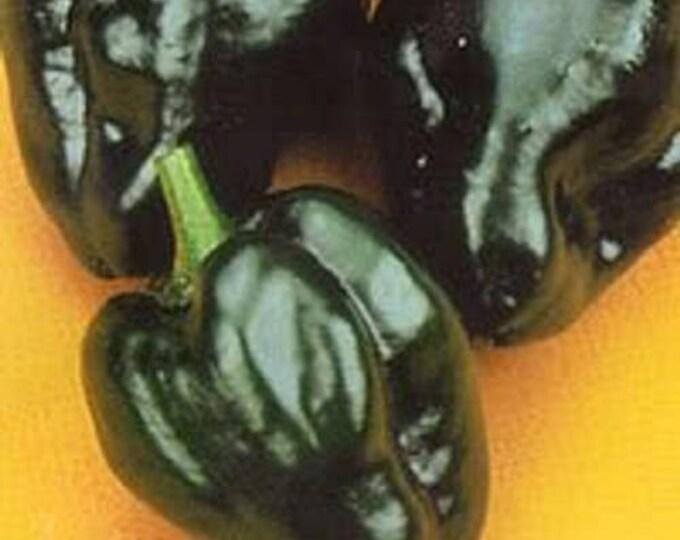 50 ANCHO POBLANO PEPPER Chili Pepper Capsicum Annuum Vegetable Seeds