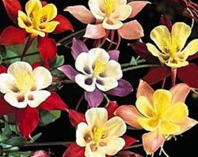 50 Mixed Colors MCKANAS GIANT COLUMBINE Aquilegia Vulgaris Flower Seeds