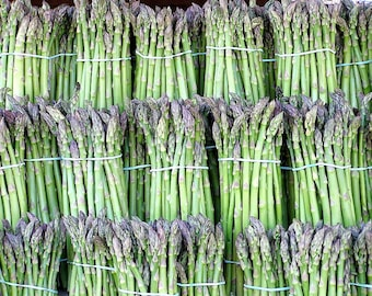 125 ASPARAGUS UC72 Officinallis Mary's Grandaughter Vegetable Seeds