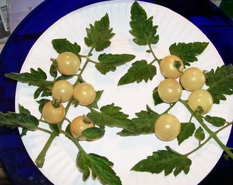 50 Organic SNOW WHITE Cherry TOMATO White Skin Lycopersicon Fruit Vegetable Seeds