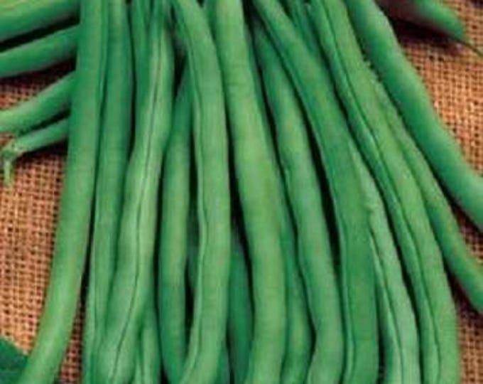 50 FRENCH Blue Lake POLE BEAN Phaseolus Vulgaris Vegetable Seeds