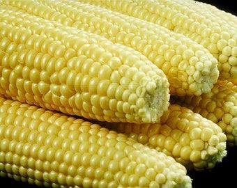 100 IOCHIEF Yellow SWEET CORN Aas Winner Zea Mays Vegetable Seeds