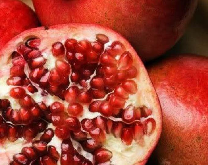 25 POMEGRANATE TREE Punica Granatum Red Fruit Seeds