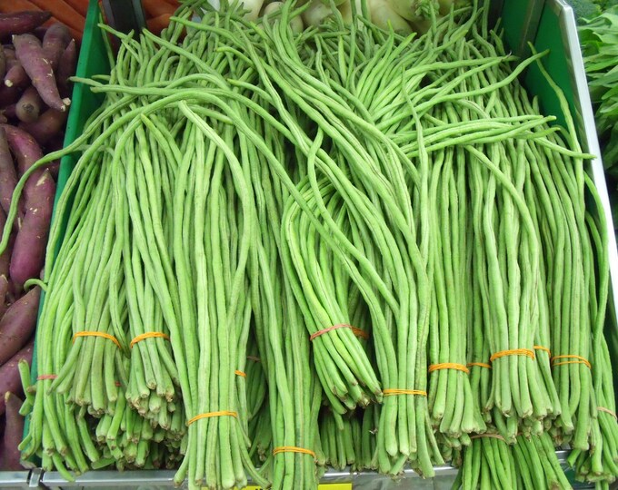 30 YARD LONG BEAN Asparagus Bean Cowpea Phaseolus Vulgaris Vegetable Seeds