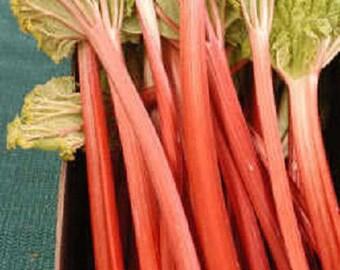 25 VICTORIA RHUBARB aka Pieplant Rheum Rhabarbarum Perennial Fruit Vegetable Seeds