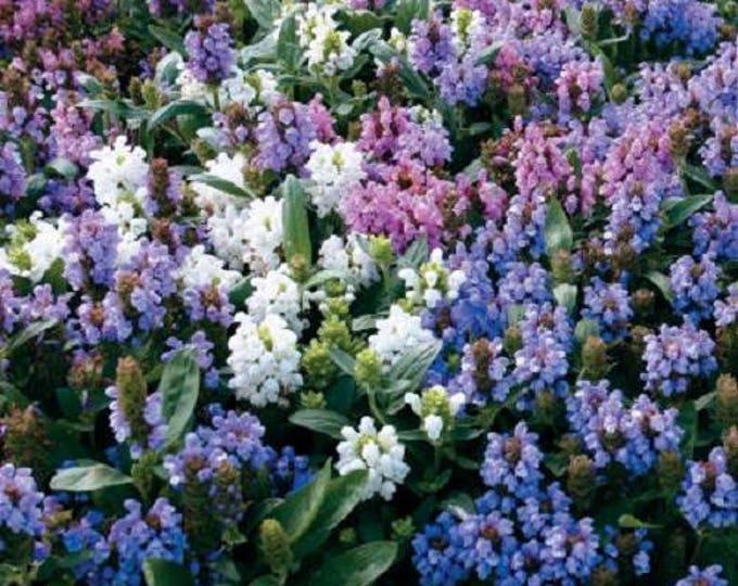50 PAGODA MIX PRUNELLA Grandiflora Bigflower Selfheal Blue Pink etc Flower Seeds