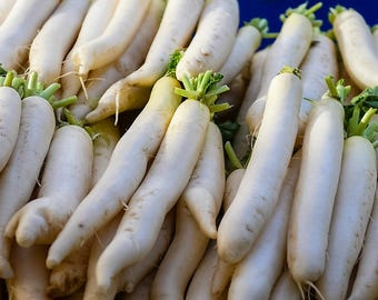 500 JAPANESE MINOWASE RADISH Huge Daikon White Raphanus Sativus Vegetable Seeds