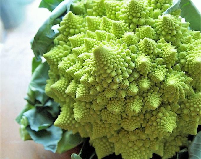 500 Organic ROMANESCO BROCCOLI Broccoflower Roman Cauliflower Pyramid Broccolo Brassica Oleracea Vegetable Seeds