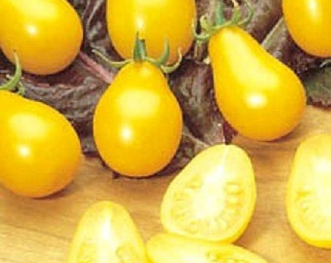 300 YELLOW PEAR TOMATO Lycopersicon Lycopersicum Fruit Vegetable Seeds