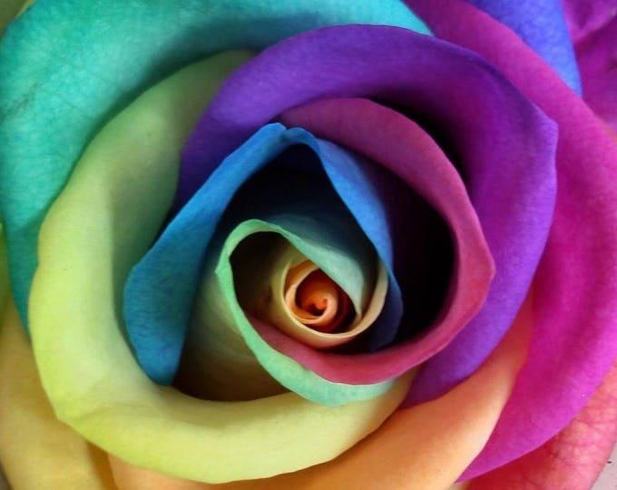 Make Your Own - 5 RAINBOW ROSE BUSH Seeds Shrub Rosa Flower *Comb S/H