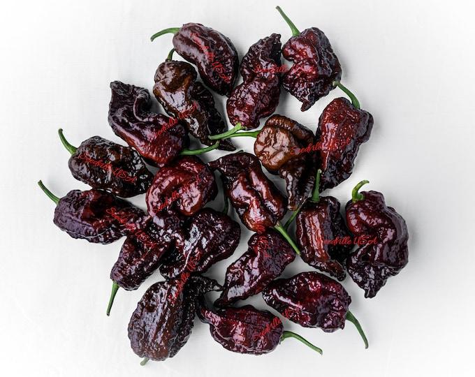 10 Chocolate CAROLINA REAPER PEPPER World's Hottest Capsicum Chinense Hot Brown Chili Vegetable Seeds