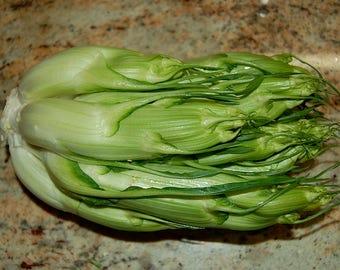 250 CICORIA CATALOGNA Puntarelle Chicorium Chicory Vegetable Seeds