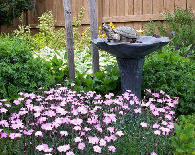 200 COTTAGE PINKS (Garden, Laced, or Feathered Pink) Dianthus Plumarius Flower Seeds
